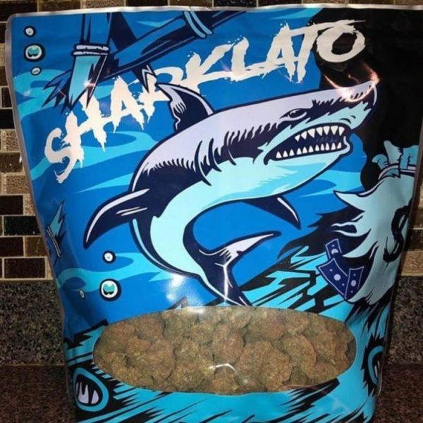 Sharklato Strain